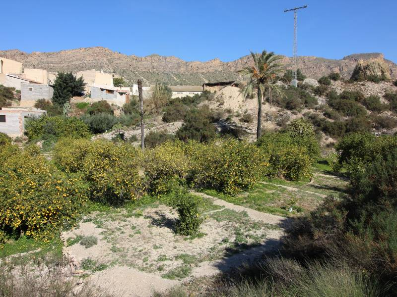 Land / Building Plot - For Sale - Blanca - Blanca