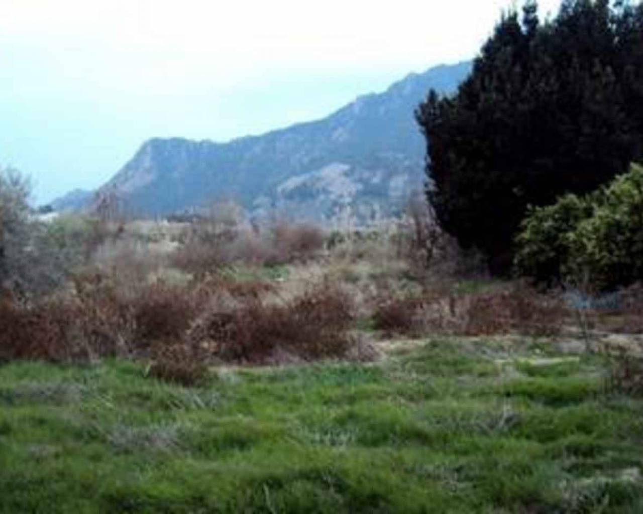 For Sale - Land / Building Plot - Blanca